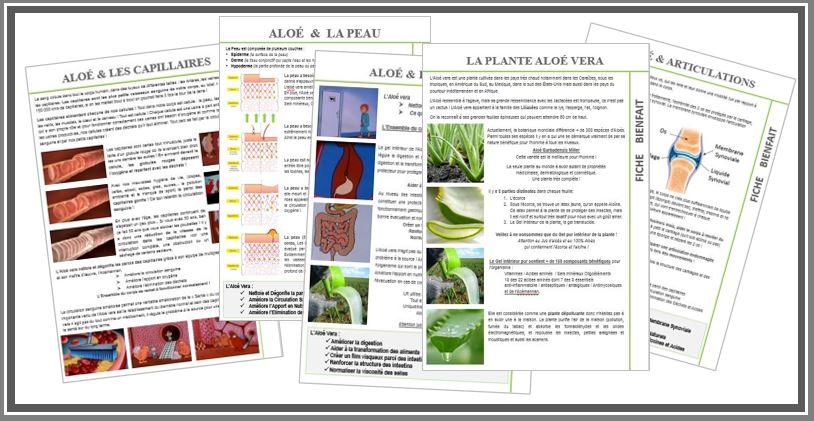 Atelier : La Plante Aloé vera et ses Bienfaits