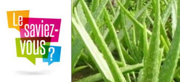 La part d'Aloévérose de nos Gels à Boire est de 700mg/L tout comme à l'état naturel !